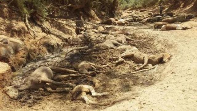 Chùm ảnh nắng nóng hãi hùng trên khắp thế giới: Tan chảy cả nhựa đường, ngựa chết cả đàn như bị thảm sát gây khiếp đảm - Ảnh 5.
