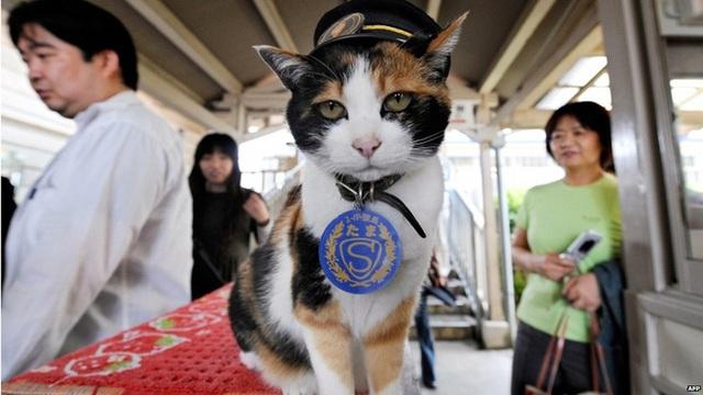 Chỉ nhờ một cô mèo hoang, công ty Nhật Bản lãi to 280 tỷ, thoát khỏi cảnh phá sản trong gang tấc - Ảnh 1.