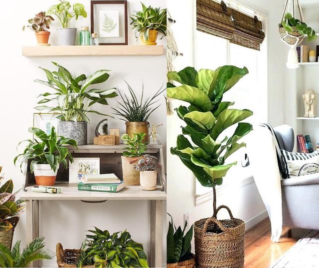 Những ý tưởng độc đáo để chiều chuộng và nâng cấp ngôi nhà của bạn lên một tiêu chuẩn sống mới: Điều số 1 đơn giản mà lại có giá trị cao không ngờ - Ảnh 3.