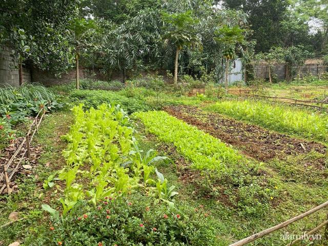 Cuộc sống yên bình trong ngôi nhà nhỏ và khu vườn xanh mát bóng cây ở ngoại thành Hà Nội - Ảnh 11.