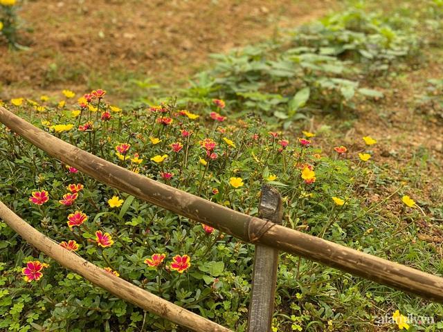 Cuộc sống yên bình trong ngôi nhà nhỏ và khu vườn xanh mát bóng cây ở ngoại thành Hà Nội - Ảnh 15.