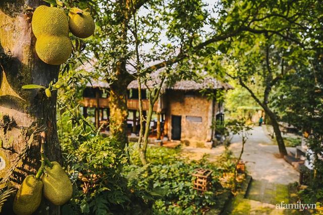 Cuộc sống yên bình trong ngôi nhà nhỏ và khu vườn xanh mát bóng cây ở ngoại thành Hà Nội - Ảnh 3.