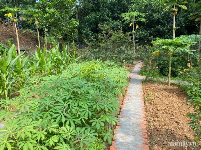 Cuộc sống yên bình trong ngôi nhà nhỏ và khu vườn xanh mát bóng cây ở ngoại thành Hà Nội - Ảnh 22.