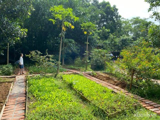 Cuộc sống yên bình trong ngôi nhà nhỏ và khu vườn xanh mát bóng cây ở ngoại thành Hà Nội - Ảnh 23.