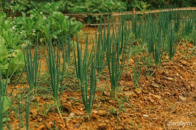 Cuộc sống yên bình trong ngôi nhà nhỏ và khu vườn xanh mát bóng cây ở ngoại thành Hà Nội - Ảnh 25.