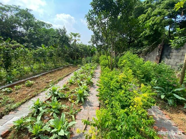 Cuộc sống yên bình trong ngôi nhà nhỏ và khu vườn xanh mát bóng cây ở ngoại thành Hà Nội - Ảnh 28.