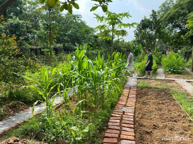 Cuộc sống yên bình trong ngôi nhà nhỏ và khu vườn xanh mát bóng cây ở ngoại thành Hà Nội - Ảnh 29.