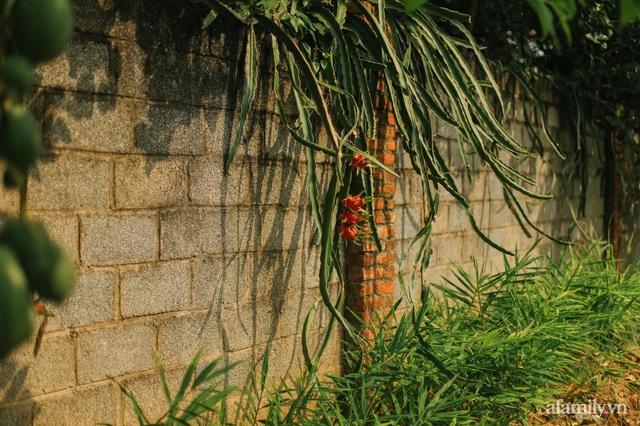 Cuộc sống yên bình trong ngôi nhà nhỏ và khu vườn xanh mát bóng cây ở ngoại thành Hà Nội - Ảnh 30.