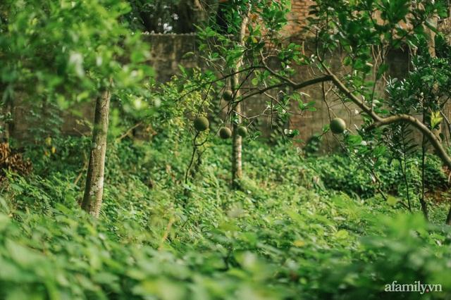 Cuộc sống yên bình trong ngôi nhà nhỏ và khu vườn xanh mát bóng cây ở ngoại thành Hà Nội - Ảnh 31.