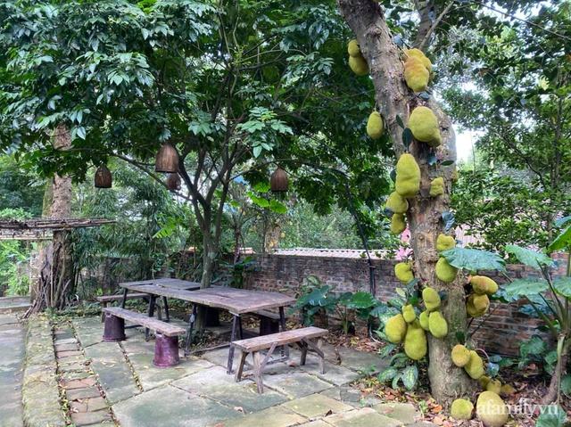 Cuộc sống yên bình trong ngôi nhà nhỏ và khu vườn xanh mát bóng cây ở ngoại thành Hà Nội - Ảnh 35.