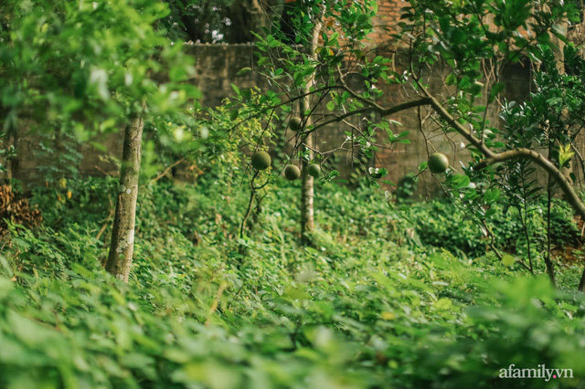 Cuộc sống yên bình trong ngôi nhà nhỏ và khu vườn xanh mát bóng cây ở ngoại thành Hà Nội - Ảnh 36.