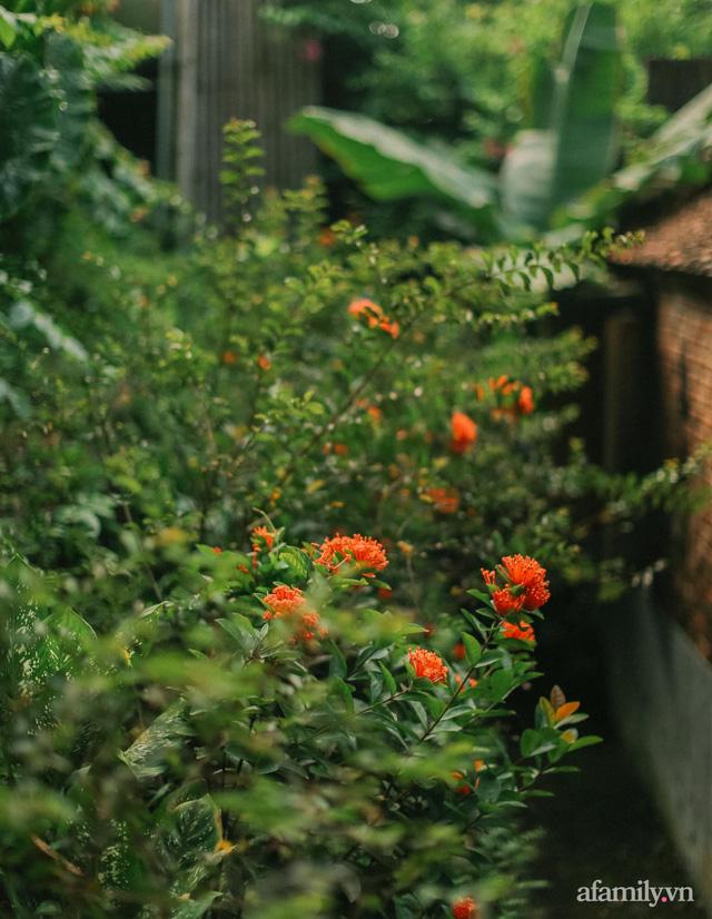 Cuộc sống yên bình trong ngôi nhà nhỏ và khu vườn xanh mát bóng cây ở ngoại thành Hà Nội - Ảnh 40.