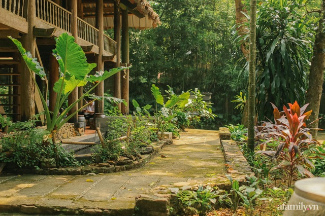 Cuộc sống yên bình trong ngôi nhà nhỏ và khu vườn xanh mát bóng cây ở ngoại thành Hà Nội - Ảnh 5.