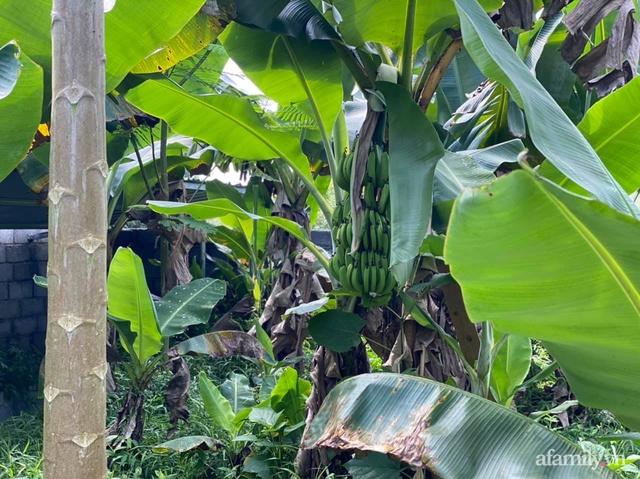 Cuộc sống yên bình trong ngôi nhà nhỏ và khu vườn xanh mát bóng cây ở ngoại thành Hà Nội - Ảnh 42.