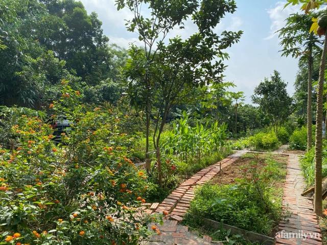 Cuộc sống yên bình trong ngôi nhà nhỏ và khu vườn xanh mát bóng cây ở ngoại thành Hà Nội - Ảnh 43.