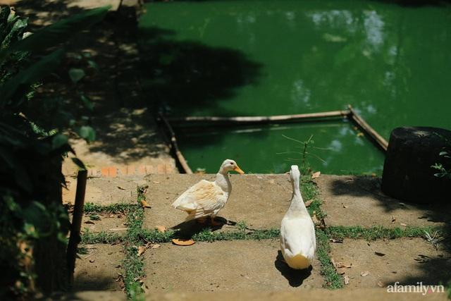 Cuộc sống yên bình trong ngôi nhà nhỏ và khu vườn xanh mát bóng cây ở ngoại thành Hà Nội - Ảnh 45.