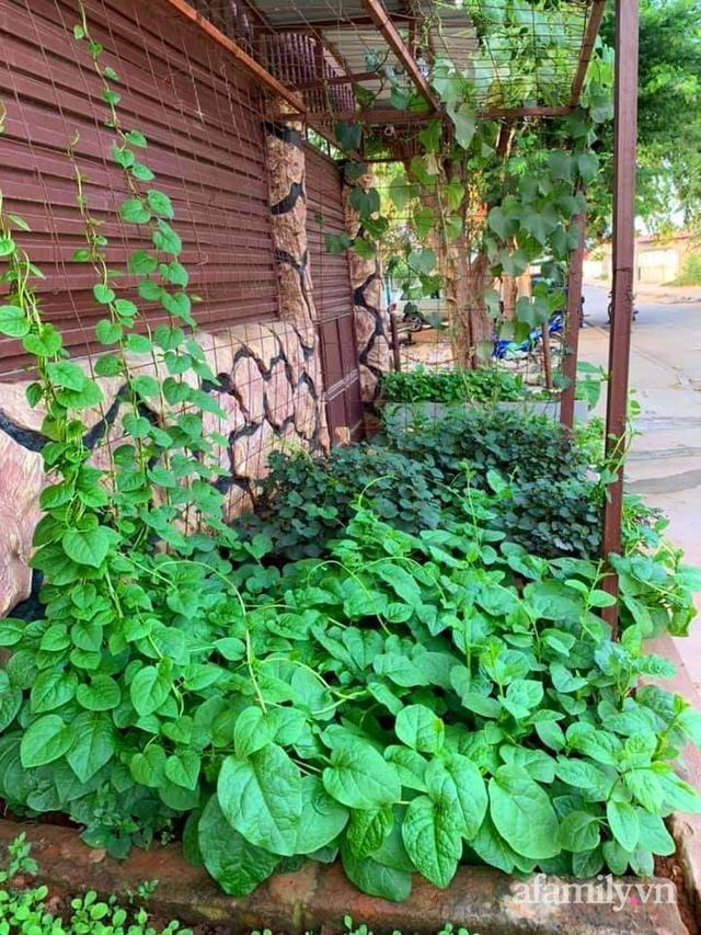 Khu vườn trước cửa xanh mát với đủ loại rau củ của chàng trai Việt ở châu Phi - Ảnh 2.