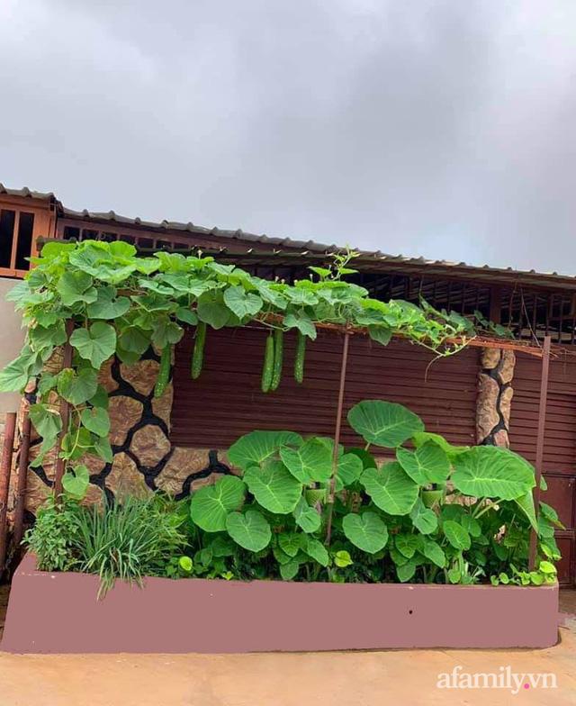 Khu vườn trước cửa xanh mát với đủ loại rau củ của chàng trai Việt ở châu Phi - Ảnh 12.