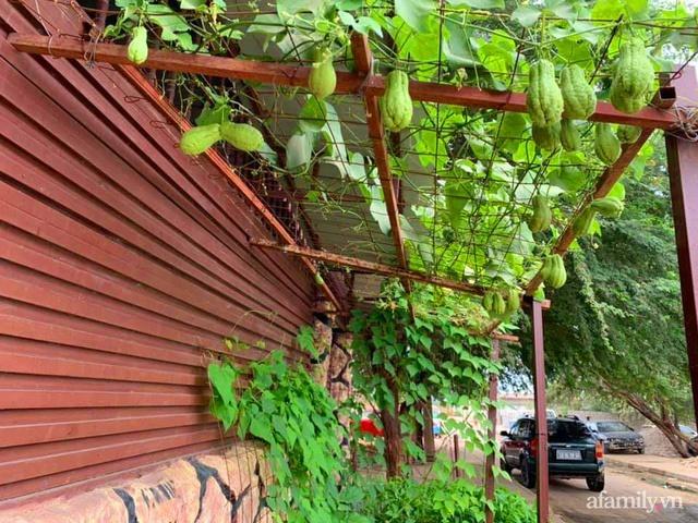 Khu vườn trước cửa xanh mát với đủ loại rau củ của chàng trai Việt ở châu Phi - Ảnh 13.