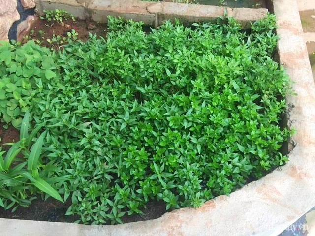 Khu vườn trước cửa xanh mát với đủ loại rau củ của chàng trai Việt ở châu Phi - Ảnh 14.