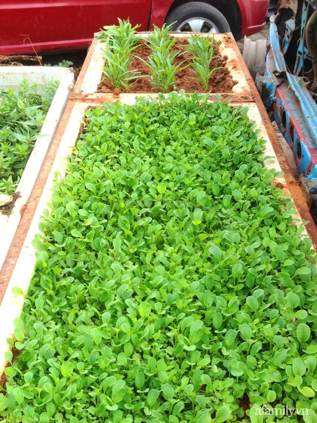 Khu vườn trước cửa xanh mát với đủ loại rau củ của chàng trai Việt ở châu Phi - Ảnh 18.