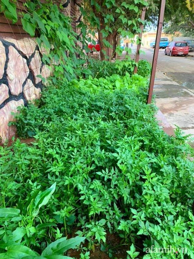 Khu vườn trước cửa xanh mát với đủ loại rau củ của chàng trai Việt ở châu Phi - Ảnh 19.