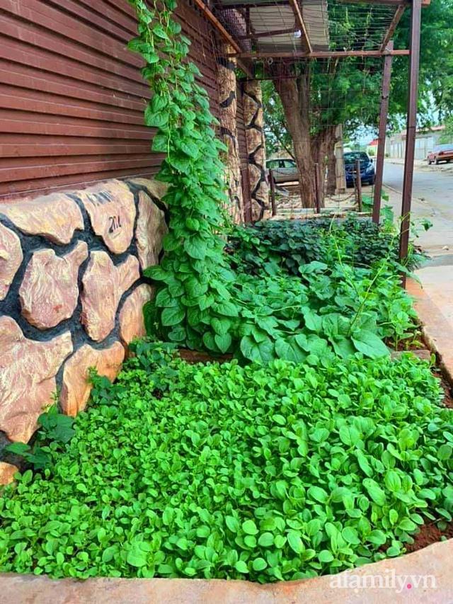 Khu vườn trước cửa xanh mát với đủ loại rau củ của chàng trai Việt ở châu Phi - Ảnh 20.