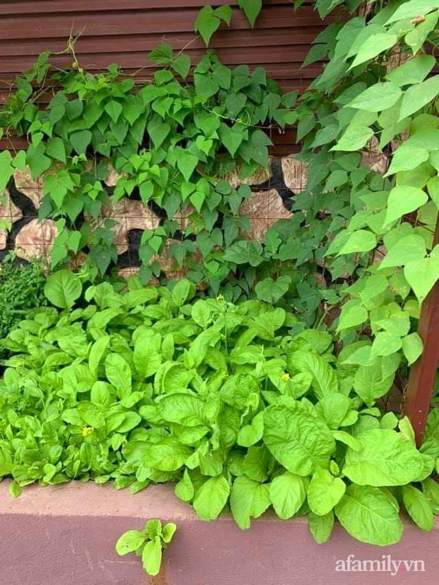 Khu vườn trước cửa xanh mát với đủ loại rau củ của chàng trai Việt ở châu Phi - Ảnh 23.