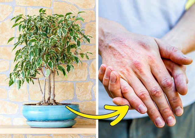 7 loại cây cảnh dù đẹp đến mấy cũng không nên trồng trong nhà vì gây nguy hiểm  - Ảnh 4.