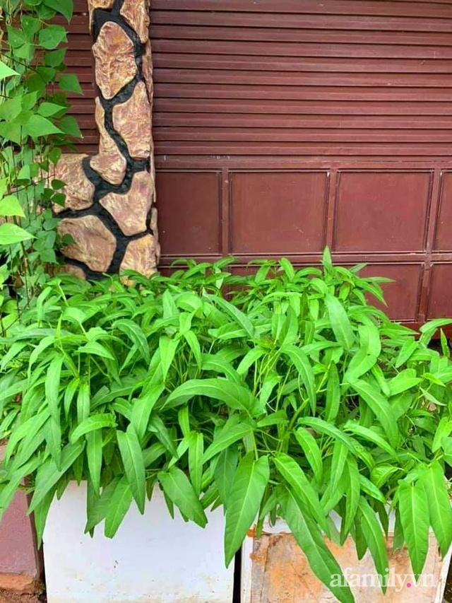 Khu vườn trước cửa xanh mát với đủ loại rau củ của chàng trai Việt ở châu Phi - Ảnh 4.
