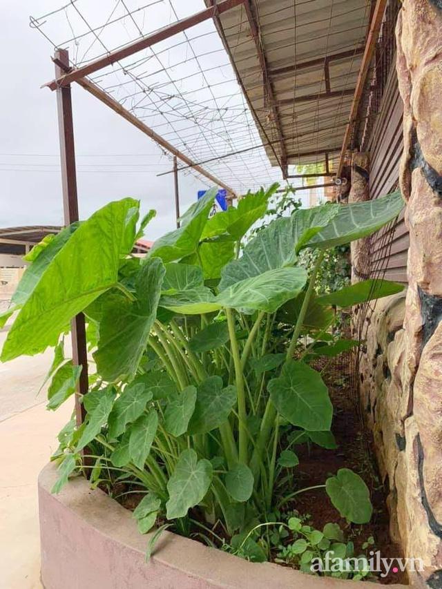 Khu vườn trước cửa xanh mát với đủ loại rau củ của chàng trai Việt ở châu Phi - Ảnh 5.