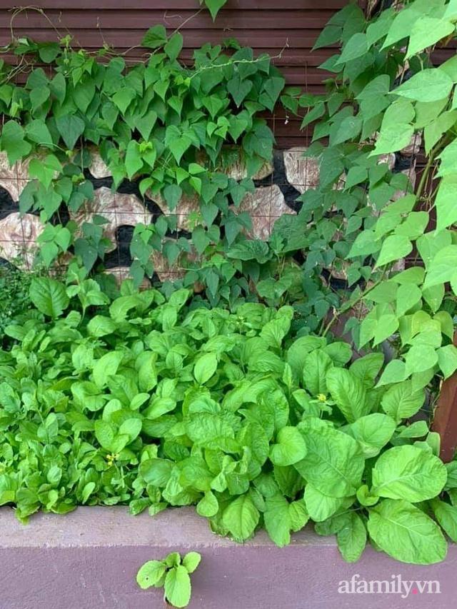 Khu vườn trước cửa xanh mát với đủ loại rau củ của chàng trai Việt ở châu Phi - Ảnh 10.