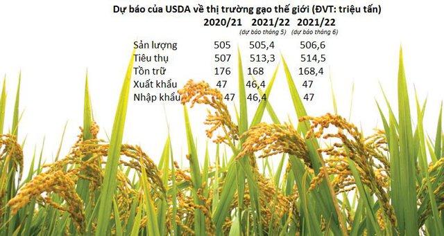 Giá gạo Châu Á lao dốc sau khi USDA công bố dự báo lạc quan về sản lượng và xuất khẩu gạo thế giới - Ảnh 1.