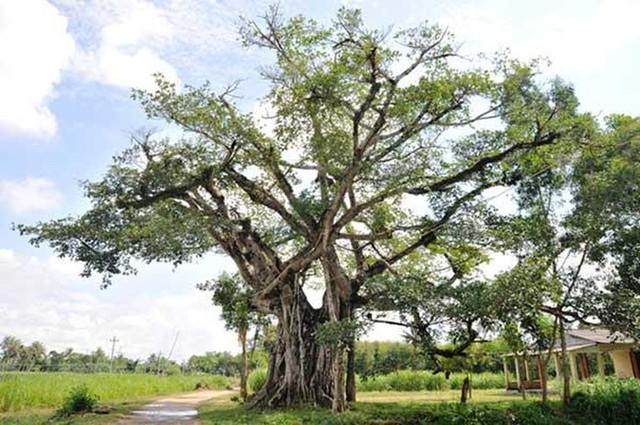Đừng dại mà trồng những loại cây này trong nhà: Vừa không hợp phong thuỷ, vừa có nguy cơ bị điếc hoặc bị ngộ độc dẫn đến tử vong - Ảnh 6.