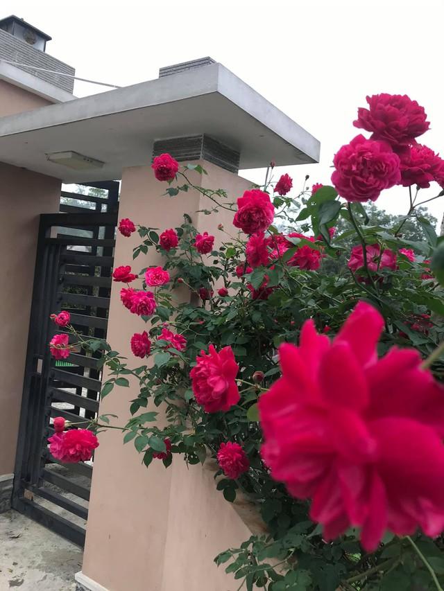 Cuộc sống an yên trong ngôi nhà có vườn hoa hồng quanh năm tỏa hương sắc của gia đình 3 thế hệ ở Ba Vì, Hà Nội - Ảnh 13.