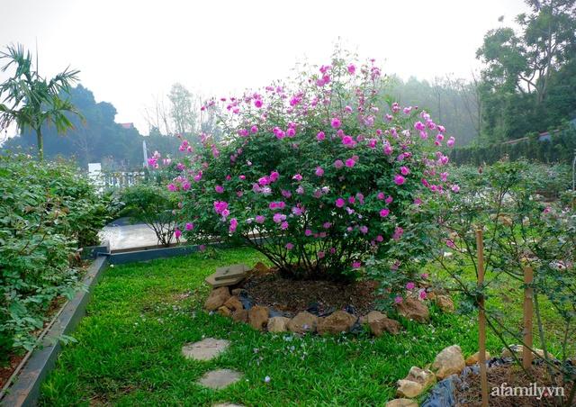 Cuộc sống an yên trong ngôi nhà có vườn hoa hồng quanh năm tỏa hương sắc của gia đình 3 thế hệ ở Ba Vì, Hà Nội - Ảnh 15.