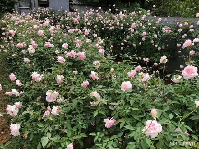 Cuộc sống an yên trong ngôi nhà có vườn hoa hồng quanh năm tỏa hương sắc của gia đình 3 thế hệ ở Ba Vì, Hà Nội - Ảnh 17.