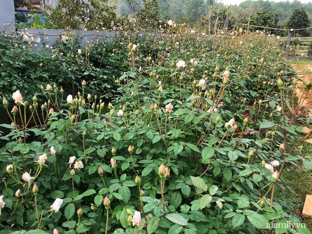 Cuộc sống an yên trong ngôi nhà có vườn hoa hồng quanh năm tỏa hương sắc của gia đình 3 thế hệ ở Ba Vì, Hà Nội - Ảnh 18.