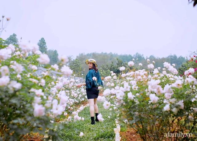 Cuộc sống an yên trong ngôi nhà có vườn hoa hồng quanh năm tỏa hương sắc của gia đình 3 thế hệ ở Ba Vì, Hà Nội - Ảnh 3.