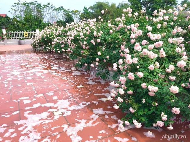 Cuộc sống an yên trong ngôi nhà có vườn hoa hồng quanh năm tỏa hương sắc của gia đình 3 thế hệ ở Ba Vì, Hà Nội - Ảnh 21.