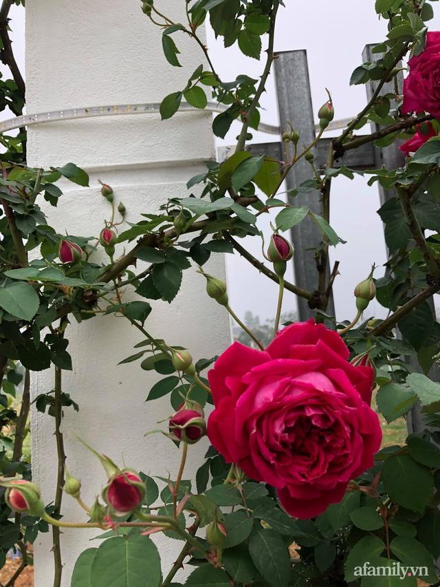 Cuộc sống an yên trong ngôi nhà có vườn hoa hồng quanh năm tỏa hương sắc của gia đình 3 thế hệ ở Ba Vì, Hà Nội - Ảnh 24.