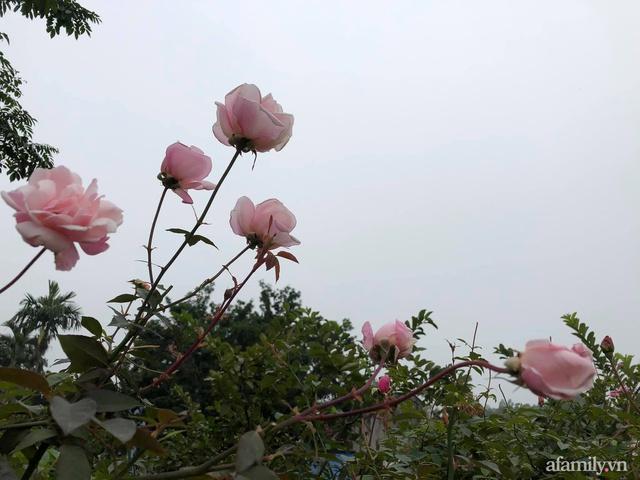 Cuộc sống an yên trong ngôi nhà có vườn hoa hồng quanh năm tỏa hương sắc của gia đình 3 thế hệ ở Ba Vì, Hà Nội - Ảnh 25.