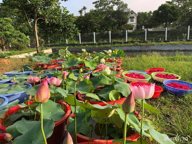 Cuộc sống an yên trong ngôi nhà có vườn hoa hồng quanh năm tỏa hương sắc của gia đình 3 thế hệ ở Ba Vì, Hà Nội - Ảnh 27.