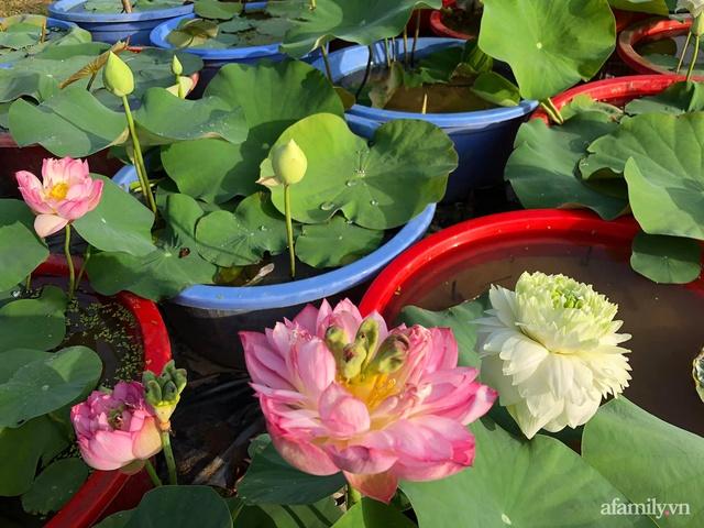 Cuộc sống an yên trong ngôi nhà có vườn hoa hồng quanh năm tỏa hương sắc của gia đình 3 thế hệ ở Ba Vì, Hà Nội - Ảnh 29.