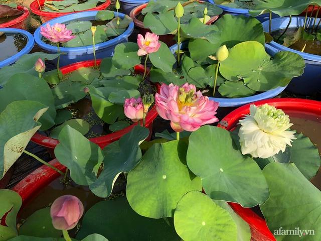 Cuộc sống an yên trong ngôi nhà có vườn hoa hồng quanh năm tỏa hương sắc của gia đình 3 thế hệ ở Ba Vì, Hà Nội - Ảnh 30.