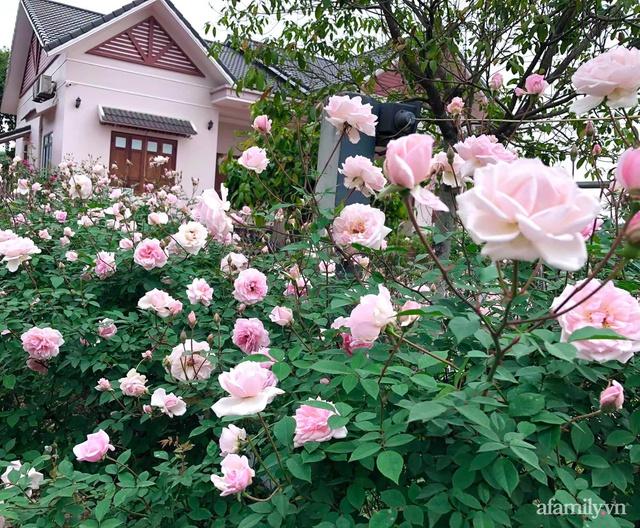 Cuộc sống an yên trong ngôi nhà có vườn hoa hồng quanh năm tỏa hương sắc của gia đình 3 thế hệ ở Ba Vì, Hà Nội - Ảnh 4.