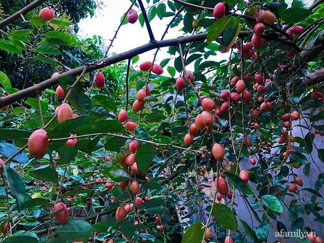 Cuộc sống an yên trong ngôi nhà có vườn hoa hồng quanh năm tỏa hương sắc của gia đình 3 thế hệ ở Ba Vì, Hà Nội - Ảnh 31.
