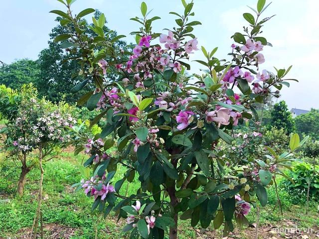 Cuộc sống an yên trong ngôi nhà có vườn hoa hồng quanh năm tỏa hương sắc của gia đình 3 thế hệ ở Ba Vì, Hà Nội - Ảnh 34.