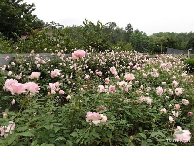 Cuộc sống an yên trong ngôi nhà có vườn hoa hồng quanh năm tỏa hương sắc của gia đình 3 thế hệ ở Ba Vì, Hà Nội - Ảnh 6.