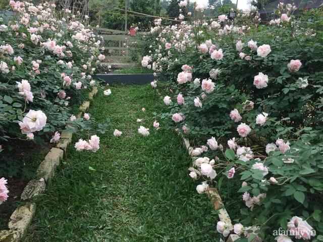 Cuộc sống an yên trong ngôi nhà có vườn hoa hồng quanh năm tỏa hương sắc của gia đình 3 thế hệ ở Ba Vì, Hà Nội - Ảnh 7.